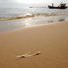 the sea-gull feather (Werner Schnell Images (2.stream)) Tags: sea beach strand boot boat sand seagull feather baltic ostsee pp usedom werner ws schnell feder heringsdorf ahlbeck platinumphoto ysplix öwe wernerschnell wernerschnellimages