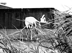 Bambi (shy) (Paul mit dem Pinscher) Tags: bw abandoned pen germany graffiti hamburg olympus architektur sw bambi reh altona ep1 hansestadt marode frappant artfilter hamburgaltona grosebergstrase rehlein frappantkomplex frappantaltona