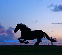 horse silhouette (The Family Dog) Tags: horses horse silhouette caballo cheval caballos bravo cavalos pferde equine gallop equines cheveaux tropillas tropilla equestrianphotography tropsilla