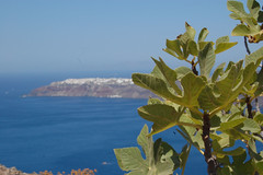 Hiding behind the figs (Sciabby) Tags: santorini greece oia figs