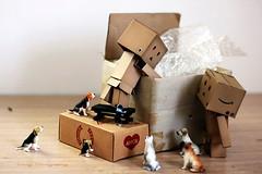 有找到嗎?! (sⓘndy°) Tags: sanfrancisco canon toy toys box figure figurine sindy kaiyodo yotsuba danbo revoltech danboard 紙箱人 阿楞 amazoncomjp