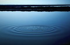 (chri chan) Tags: morning lake water pond ripple droplet nikond60