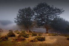 Morning (Carlo Columba) Tags: park wood morning italy parco nature fog ilovenature natura it pa sicily environment nebbia sicilia messina bosco ambiente mattino nebrodi cesar canoniani