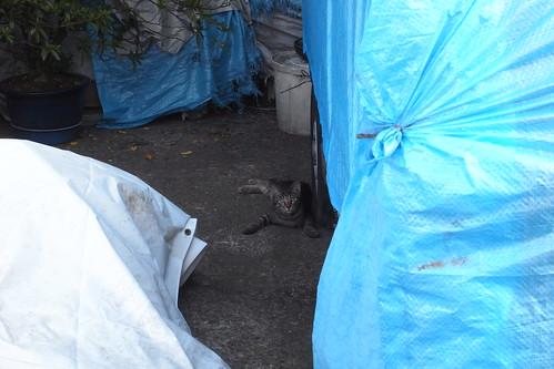 Today's Cat@20090925