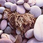 Seaweed-in-Pebbles on Pebbles