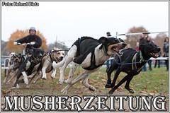 Schlittenhunderennen im Tierpark Ströhen