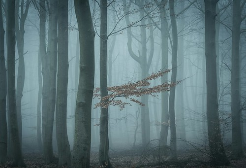 Twilight (Petra Runge) Tags: wald dämmerung nebel blau mystik bäume natur wood forest fog mist nature twilight blue landscape landschaft germany deutschland
