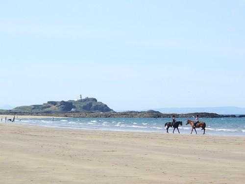 sea horses 1