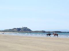 sea horses 1 (byronv2) Tags: sea summer horse woman lighthouse beach girl island coast scotland forth rider seahorses yellowcraig eastlothian fidra dirleton rnbforth fidralighthouse