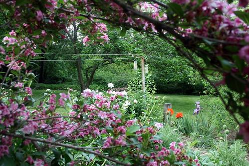 The hummingbirds love this bush