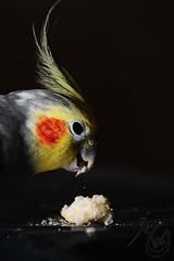 -:: Join MEEEE -------- (AMMAR Photo) Tags: red food bird yellow grey photo bahrain cocktail nikkor 70300mm ammar nokin d300