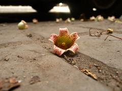 flor de asfalto