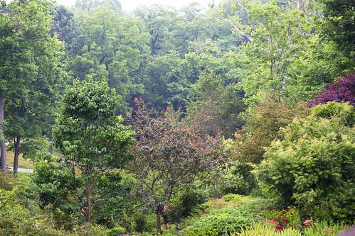 Lilly Gardens
