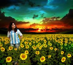 Independencia Argentina - rE (RoxiRosita) Tags: sunset sun color sol argentina photoshop sunrise landscape atardecer paisaje explore amanecer campo independencia 9dejulio girasoles roxirosita cynthiaroxanariosnuez