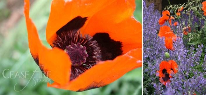 08-06-flowers1