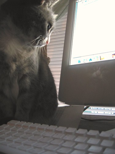 cat + mac