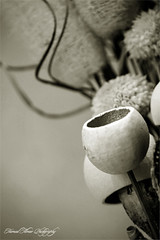 Still (Hamad Al-meer) Tags: life lighting bw stilllife white black flower art canon studio eos still close setup hamad 30d artphoto  supershot almeer platinumphoto  hamadhd hamadhdcom wwwhamadhdcom