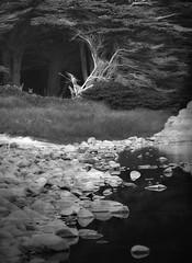 Beach Wood, Big Sur (John DiLello) Tags: woods bigsur tidepool centralcaliforniacoast molenabeach
