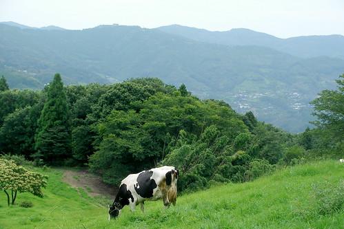 和歌山県黒沢牧場