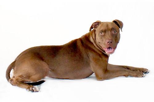 super.pup sheba