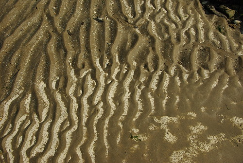 Patterns in the Mud - Foreness Bay