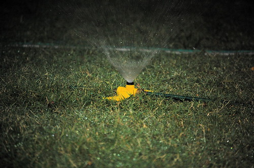 Sprinklers in the Rain