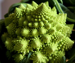 Romanesco broccoli (or Roman cauliflower) (paul_clarke) Tags: fractal logarithmicspiral romanescobroccoli paulfav