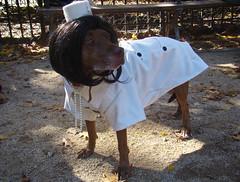 jackie o dog