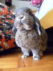 I lean on you (unaerica) Tags: italy hairy pet pets cute rabbit bunny bunnies nature beauty animals closeup fur outdoors nikon friend funny italia friendship princess sweet adorable fluffy happiness ears plush moustache occhi curious animali lapin tenderness mypet coniglio cuccioli kanin coniglietto lopears orecchie unaerica pipola coniglietta coniglietti