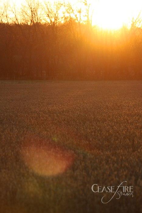 11-10-crops11