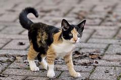 001584 D 300 (Massimo Marchina) Tags: italy animals cat italia gato katze gatto vicenza veneto mimì afsnikkor80200128dnikoned