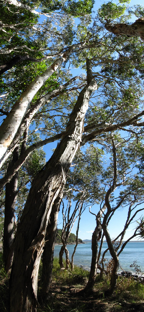 Tea Tree Bay vertorama