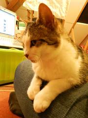 Thatsit on my lap