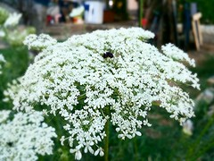 Fiori di campo (Niccol De Bartolo) Tags: flower verde art nature photo flickr natura days 365 fiore flickrandroidapp:filter=none