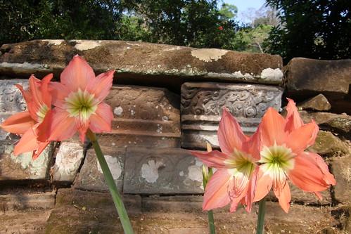 044.迎著陽光挺立的花朵 (1)
