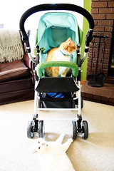 Stroller Rapture & Nursery Feature
