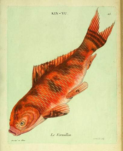 011-El Bermellon-Histoire naturelle des dorades de la Chine-Martinet 1780