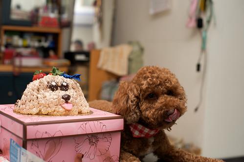 【DIDI】五歲生日