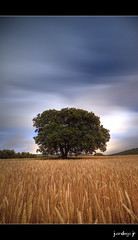 Guide Me Home (juandiegojr) Tags: longexposure espaa moon field spain nocturnal wheat luna nocturna campo moonlight malaga trigo freddiemercury largaexposicion villanuevadelrosario montserratcaball nikond90 guidemehome tokinaatx1116mmf28afprodx