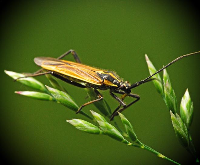 Bug portrait