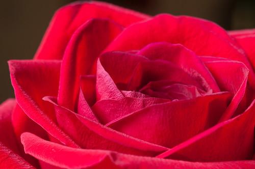 A Dozen Roses for Mom - 7