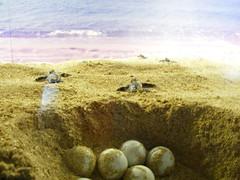 綠攜龜觀光保育中心