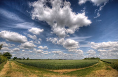 England: Northamptonshire - Fields of Wheat (Tim Blessed) Tags: uk sky nature clouds landscapes countryside scenery wheat farming land crops singlerawtonemapped