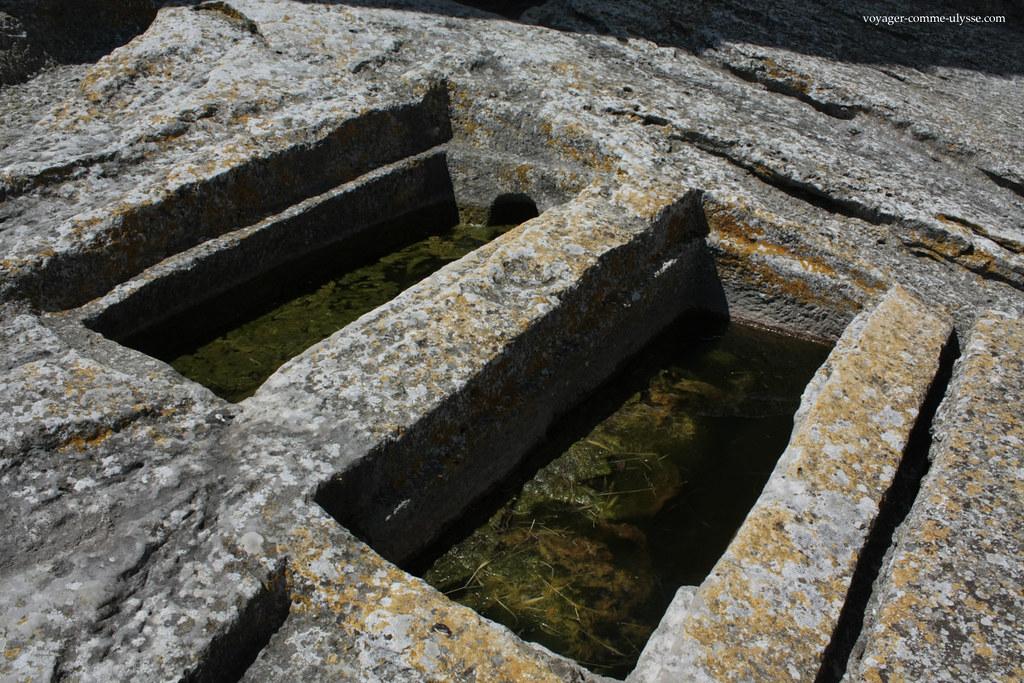 La faune et la flore présente dans l'eau verte de la nécropole est protégée!