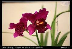 20090711_29礁溪金車蘭花園