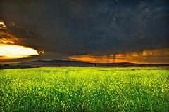 """ Yellow "" (Alfredo11) Tags: flowers sky sun flores texture textura sol rain silhouette clouds landscape mexico lluvia plantas pants paisaje cielo nubes alfredo tormenta strom siluetas treatment tratamiento nikond3"
