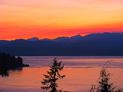 tree top sunset (David Fitzgerald3) Tags: ocean sunset sea sky sun mountains nature water sunshine clouds landscape fire washington forrest ufo alderbrook hoodcanal