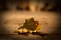 Lonely leaf left alone (Dave Heuts) Tags: world street old light summer david nature beautiful dave wonderful outdoors licht leaf fantastic scenery europe mood dof view lumire scenic streetphotography natuur atmosphere blad explore zomer stunning mooi incredible frontpage available duitsland beautifulscenery straat magiclight dramaticlight straatfotografie daveheuts heuts dagjeduitslandxantenkevelaar