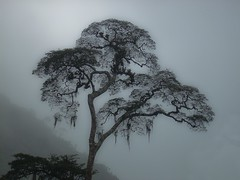 rvore com neblina (Parque do Ing - Terespolis - inverno)  / Misty tree (Inga Park - Terespolis - Brasil - winter) (Valcir Siqueira) Tags: wood trees tree nature fog forest photography cool pretty sweet natureza paisagem bosque groove neblina floresta soe rvores belo blueribbonwinner colorphotoaward flickraward thesecretlifeoftrees thebestofday gnneniyisi spiritofphotography andromeda50 absolutelyperrrfect bestcapturesaoi mygearandme mygearandmebronze mygearandmesilver impecableimagen