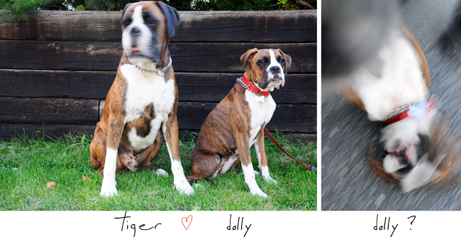 tiger & dolly